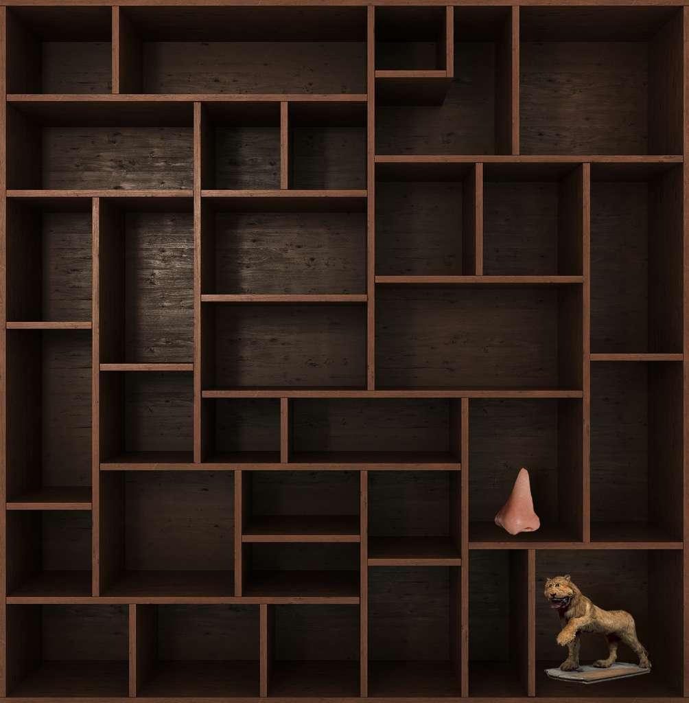 Et de deux ! Rendez-vous dans deux semaines pour un nouvel objet, dans le Cabinet de curiosités. © Adobe Stock, nosorogua, Futura