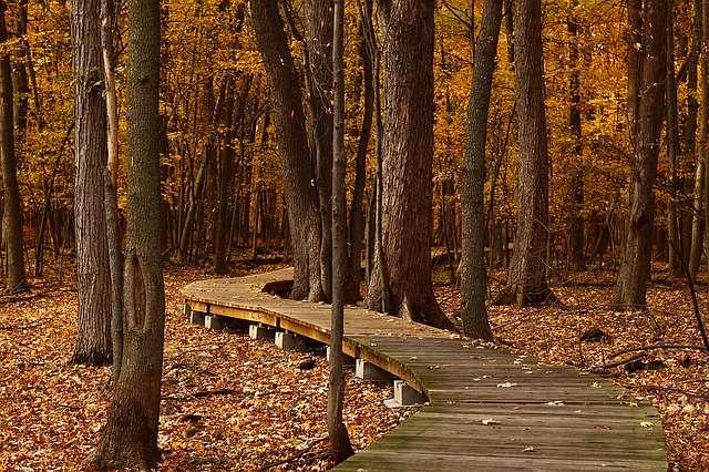 Pour éviter d'abîmer la forêt, marchons sur des caillebotis. © PGloutnay, Pixabay, DP