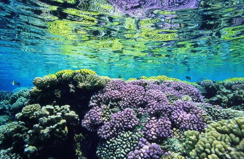 Les récifs de coraux protégeant les côtes. © Alexis Rosenfeld, reproduction interdite