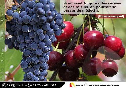 Cerises et raisins