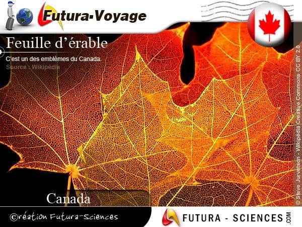 Feuille d'érable symbole du Canada