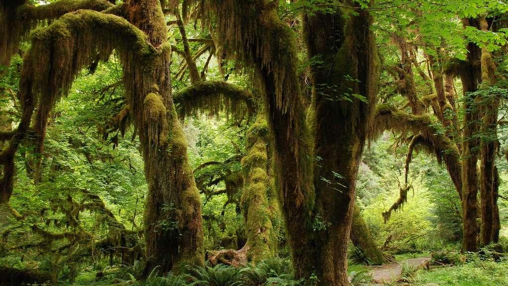Forêt tropicale primaire