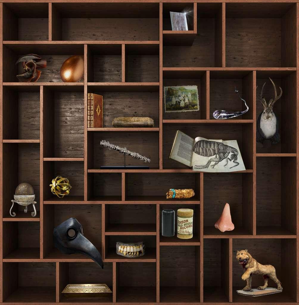 Rendez-vous dans deux semaines pour un nouveau chapitre du Cabinet de curiosités. © nosorogua, Adobe Stock