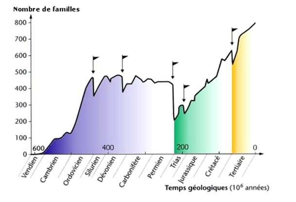 Diversité biologique en nombre de familles selon les périodes géologiques. Les drapeaux noirs indiquent des extinctions de masse. La pire des crises a eu lieu à la fin du Permien, voilà 251 millions d'années. © D'après J.-L. Hartenberger