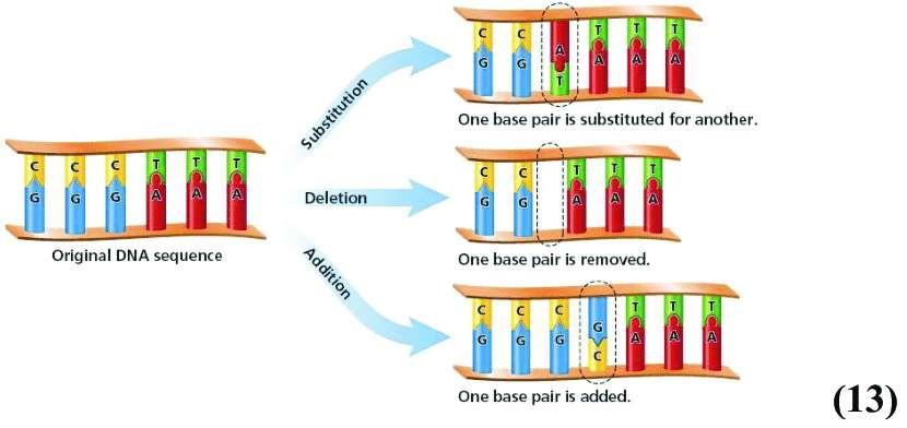 Schéma récapitulatif des trois mutations génétiques : substitution, délétion, addition (ou insertion). © Researchgate