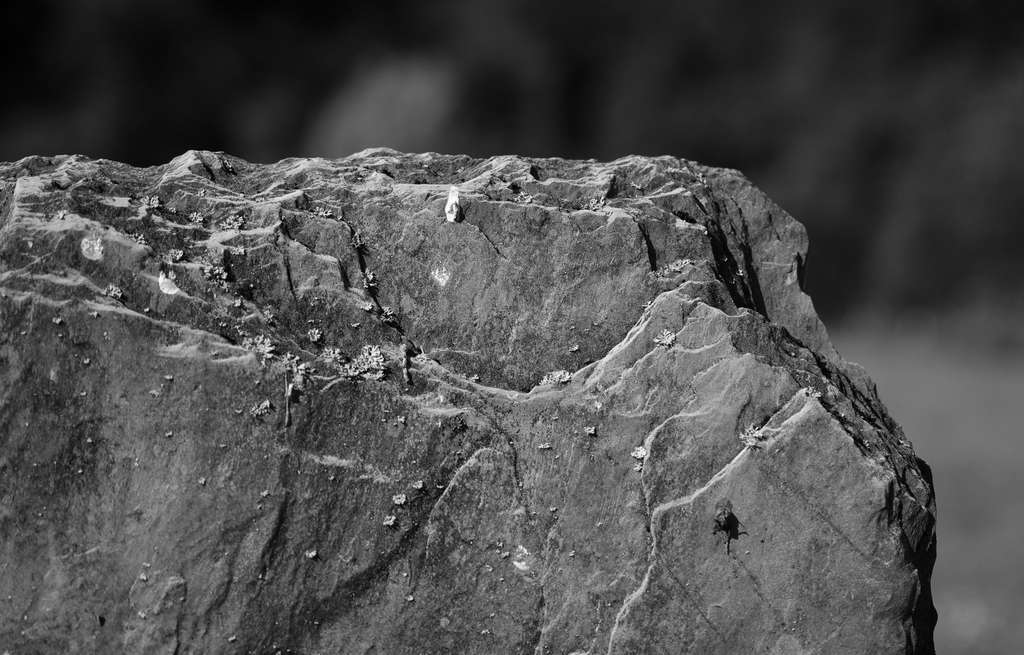 L'ardoise est un schiste à l'aspect feuilleté. © Patrice Deramaix, Flickr