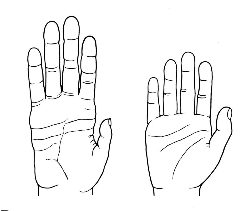 La main de l'Homme (à droite) est plus courte que celle de son cousin le chimpanzé (à gauche). Chez les grands singes, la paume et les doigts sont en général plus longs, à l'exception du pouce. © Denise Morgan, université d'Utah
