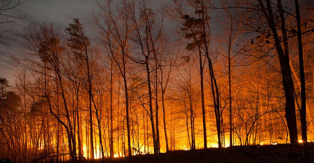 Incendie de forêt de nuit. © Jon Beard, Shutterstock