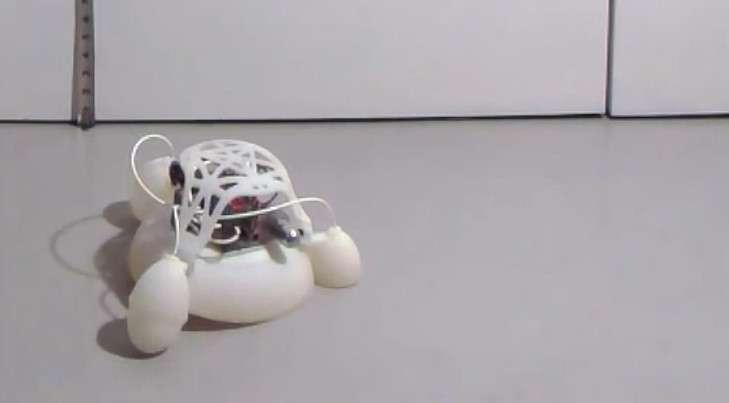 La structure de l'engin se compose de deux parties : un corps souple en forme de coupole auquel sont fixés trois pieds pneumatiques ; un module rigide qui contient le système de propulsion protégé par un bouclier semi-rigide. © Harvard University