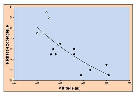 Relation observée entre le nombre de groupes animaux et l'altitude, dans les forêts de hêtre de l'Ardenne belge. Les ronds blancs correspondent au mull, les ronds noirs au moder. © DR
