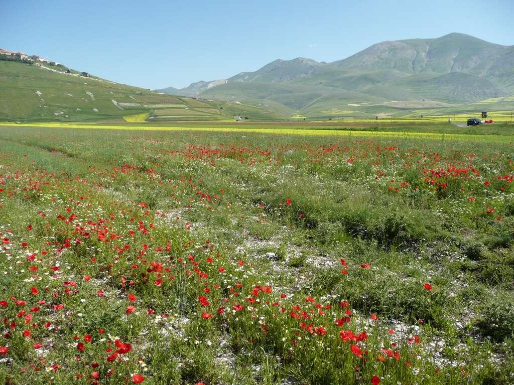 La disparition des prairies au profit de l'agriculture intensive conduit à des « déserts biologiques ». © pizzodisevo 1937, Flickr