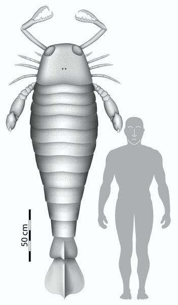Jaekelopterus rhenaniae à côté d'un homme. © Braddy et al./Biology Letters