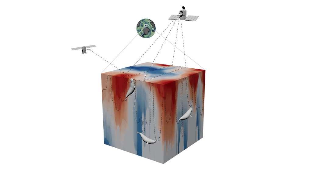 Vue en 3D des mesures de la dynamique des fronts océaniques à fine échelle permises par les données satellites et les plongées d'un éléphant de mer. © Tandi Reason Dahl
