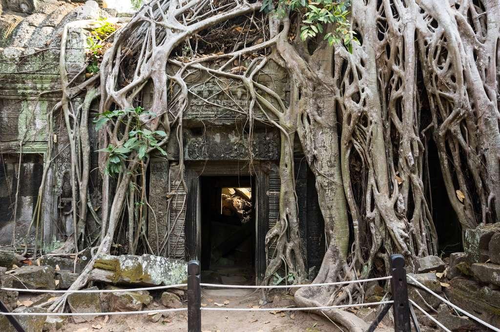 Le figuier du temple du Ta Prohm a fait une apparition remarquée dans le film Tomb Raider. © gumbao - Fotolia.com