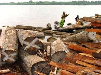 La déforestation tue les forêts