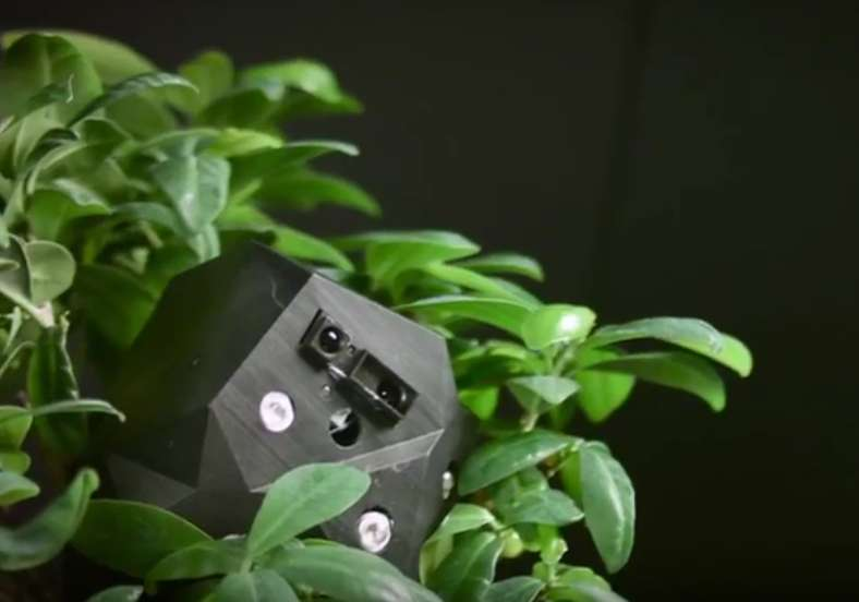 Voici l'un des modules de la plante robotique qui émet de la lumière bleue pour stimuler la croissance de la plante naturelle. © Flora Robotica