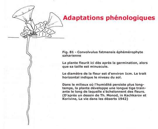 © Raynal-Roques - La botanique redécouverte - Belin-Editions INRA, 1994 Tous droits de reproduction réservés