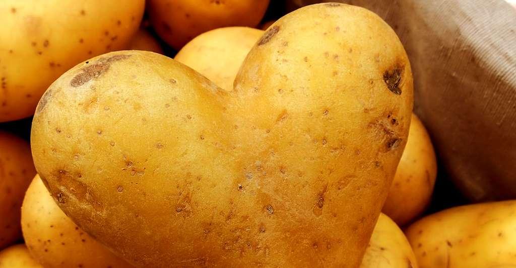 La pomme de terre possède bien des qualités culinaires et gustatives. © Vostok91, CC by-nc 2.0