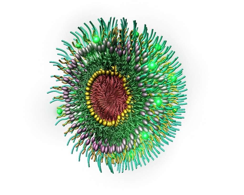 Médecine : des traitements mieux ciblés grâce aux nanoparticules