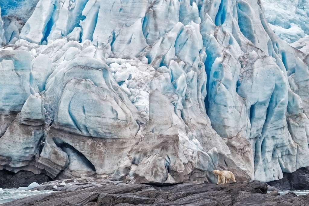 L'ouverture du nouveau Big Five au monde entier a permis à l'ours polaire d'y faire son entrée. « Ils sont le symbole de la glace qui fond sous l'effet du réchauffement climatique et portent sur eux, le message de l'urgence qu'il y a à agir », commente Krista Wright, directeur exécutif de Polar Bears International. © Anette Mossbacher, New Big 5