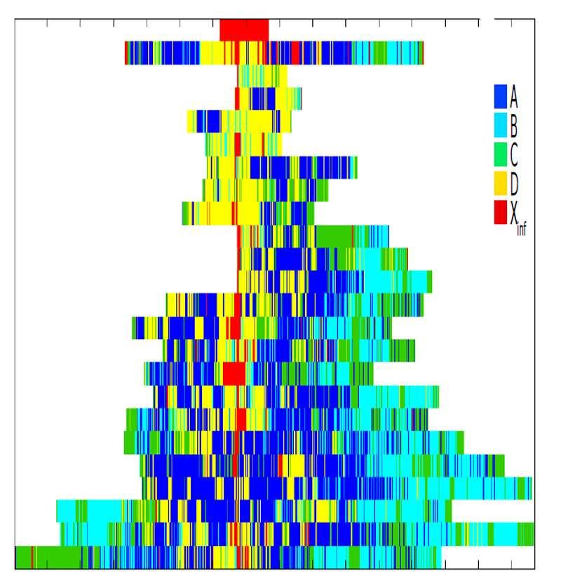 Figure 9 - Répartition des gènes des 23 chromosomes dans cinq compartiments du noyau (A, B, C, D et Xinf) d'une cellule souche embryonnaire humaine. À chaque compartiment est associé une structure spécifique, donc une fonction spécifique, de l'ADN. © Julien Riposo - Tous droits réservés