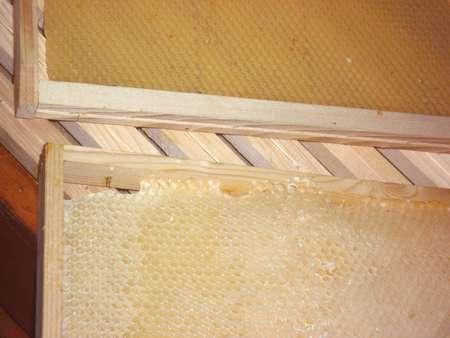 Deux cadres : l'un avec une cire gaufrée (en haut), l'autre construit par les abeilles (en bas). © Bernard Nomblot, DR