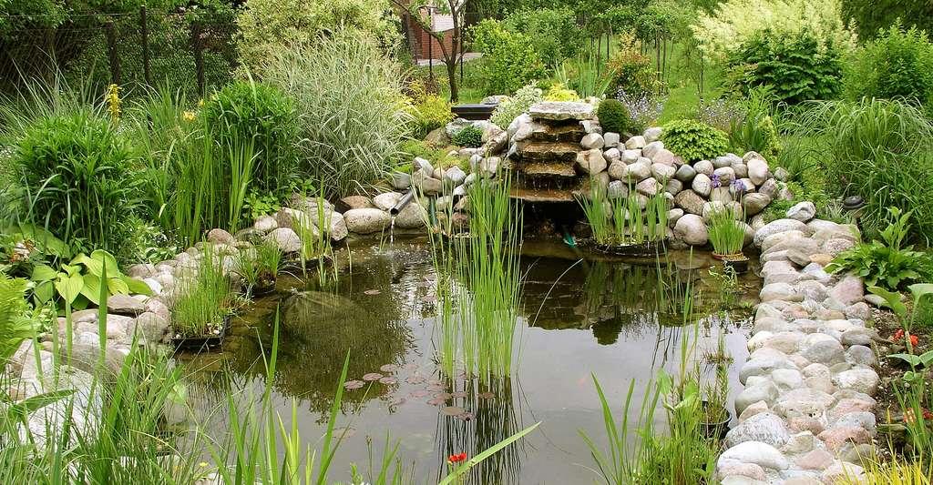 Bien choisir l'emplacement pour son bassin de jardin. © Nowis - CC BY-SA 3.0