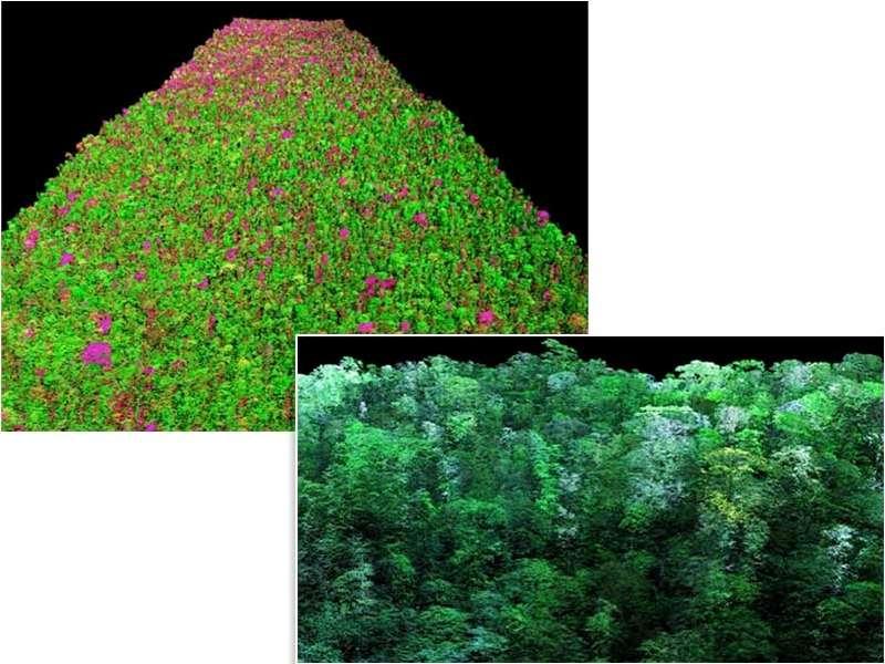 Ces deux images sont le résultat de la combinaison des images lidar et des données spectrales. La couleur rouge indique les arbres à fort stress hydrique (image du haut), alors que le blanc indique les branches sans feuilles (image du bas). © Carnegie Airborne Observatory, Carnegie Institution for Science