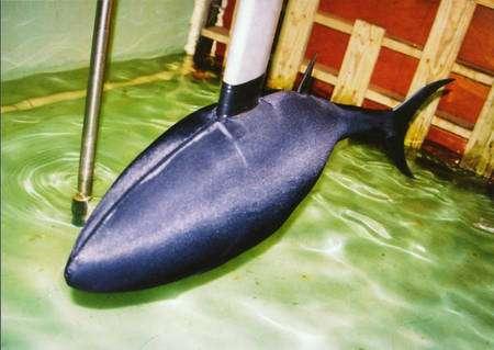 Robotuna II en cours de test, recouvert de sa peau de plastique. © MIT