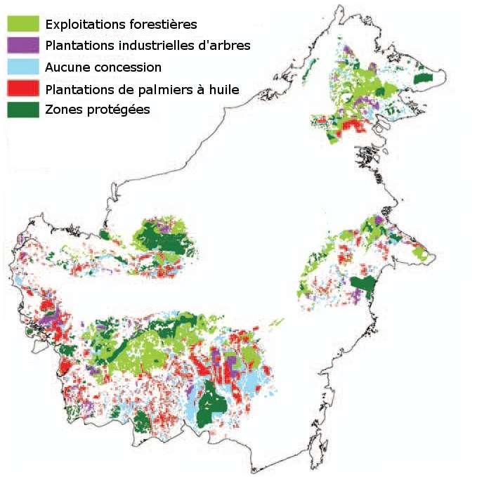 Les zones colorées correspondent à l'aire de distribution des orangs-outangs sur une partie de l'île de Bornéo. Les surfaces en vert foncé sont protégées. En vert clair, elles sont exploitées pour leur bois. En rouge et en mauve, les forêts ont laissé place à des plantations respectivement de palmiers à huile et d'arbres divers. © adapté de Wich et al. 2012, Plos One