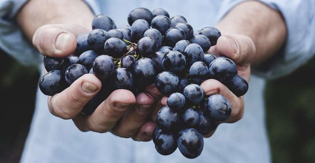 Le logo AB fait son apparition en 1985. Il a d'abord concerné uniquement les raisins. © Free-Photos, Pixabay, CC0 Creative Commons