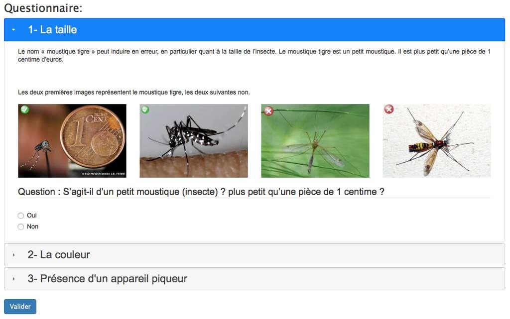 La présence de moustique tigre peut être signalée sur le portail de signalement du moustique tigre. © signalement-moutisque.fr