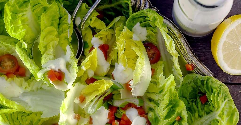 La romaine est croquante et idéale pour les salades composées de l'été. © Stu120, Shutterstock
