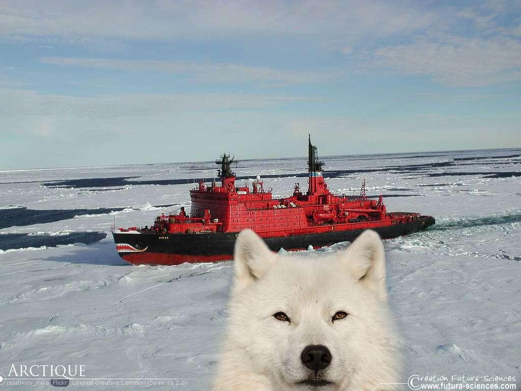 Voyage en Arctique