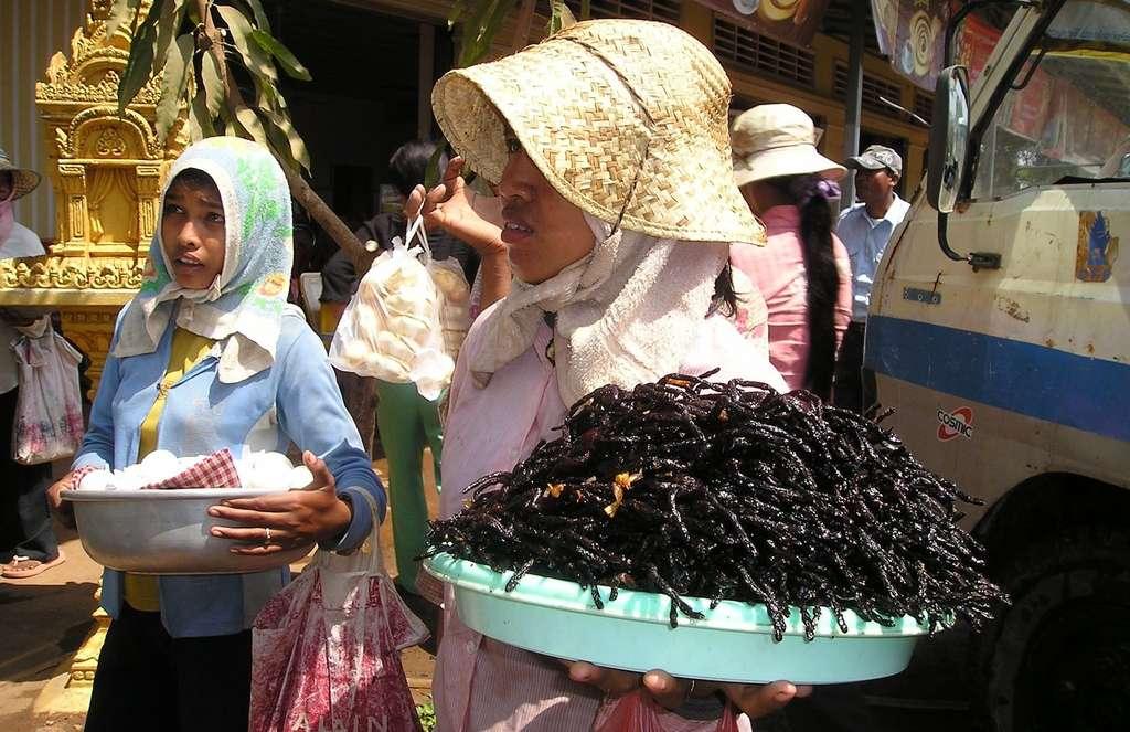 Au Cambodge, les mygales se sont révélées être une source de protéines prisée pendant la période des Khmers rouges, qui a vu près de deux millions de Cambodgiens mourir, souvent de malnutrition dans des camps de travail. Aujourd'hui, elles sont prisées des touristes à la recherche de sensations nouvelles. © Simon, Pixabay, CC0 Creative Commons