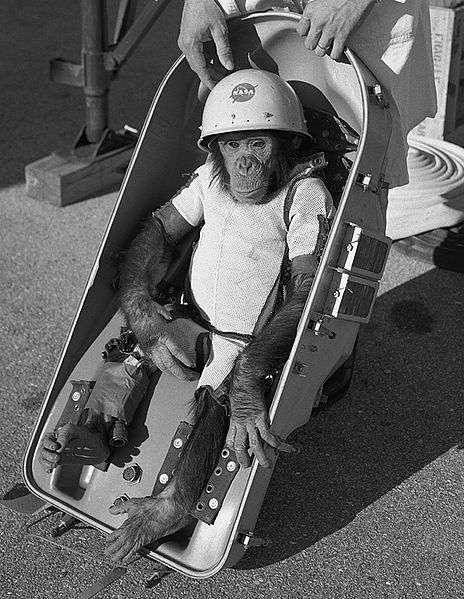 Ham le chimpanzé de l'espace. © Nasa, domaine public