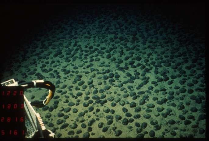 Champ de nodules polymétalliques de type C photographié par le sous-marin Nautile dans le Pacifique équatorial nord. © Ifremer, Wikimedia Commons, CC BY-SA 3.0