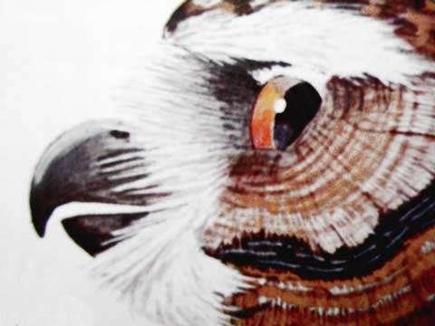 Position d'un œil de chouette. © Reproduction et utilisation interdites