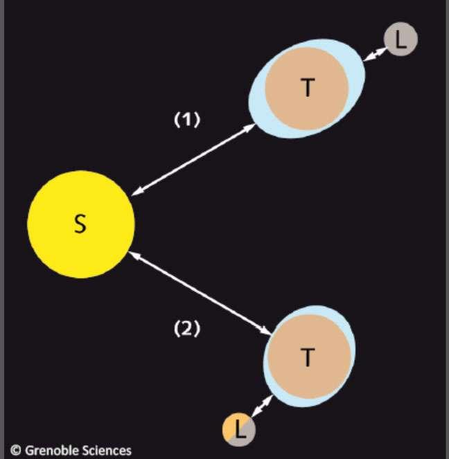 Mécanismes des marées (bleu clair) : maximales lorsque le Soleil (S), la Terre (T) et la Lune (L) sont alignés (position 1), et minimales lorsque l'axe Terre-Lune est orthogonal à l'axe Soleil-Terre (position 2). © Grenoble Sciences