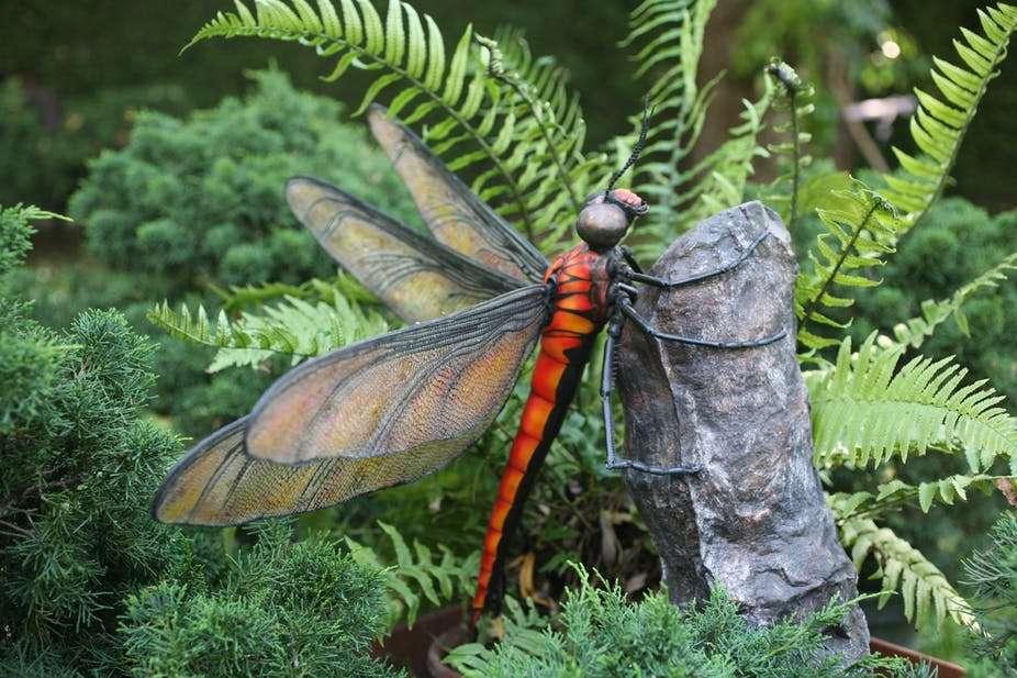 Meganeura, le plus gros insecte ayant jamais vécu sur Terre, mesurait près de 70 cm d'envergure. © Romain Garrouste, MNHN