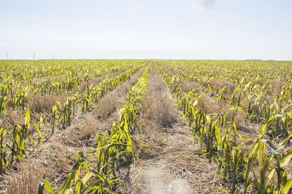 La récolte de blé européenne est au plus bas depuis six ans. © USDA NRCS South Dakota, Flickr CC BY-SA 2.0