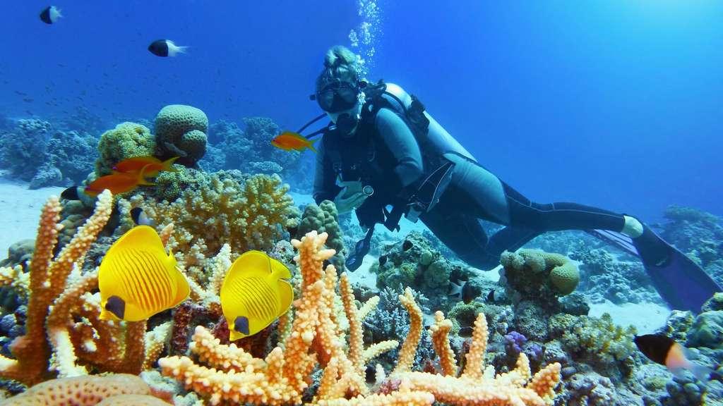 Plongée en Méditerranée : des merveilles au fond de l'eau. © Tunatura, Fotolia