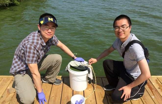 Des étudiants ramassent des efflorescences d'algues nuisibles (HAB) qui serviront ensuite à produire le carbone dur utilisé comme anode dans des batteries sodium-ion. © Da Deng, Wayne State University