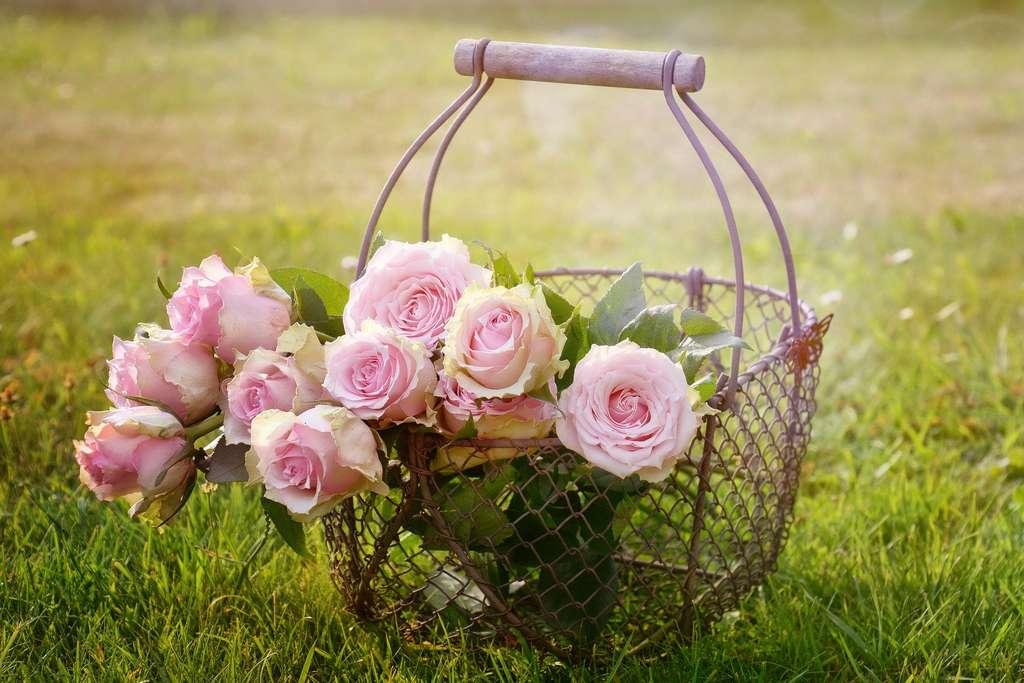 L'hydrolat de rose est utilisé depuis des siècles par nos ancêtres. © castleguard, Pixabay