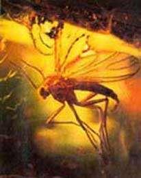 Mouche dans l'ambre Reproduction et utilisation interdites