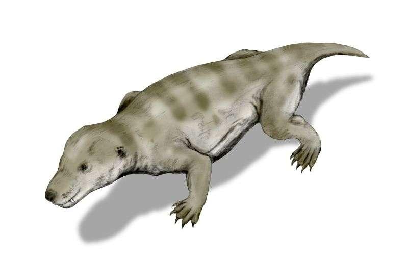 Ce dessin de Thrinaxodon Liorhinus a été réalisé à partir des travaux de Kemp de 1982. © Nobu Tamoura, CC by-sa 3.0