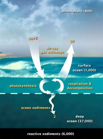 Ce schéma fait état des échanges de CO2 entre l'atmosphère et les océans. Le bilan carboné est stable. Les chiffres sont exprimés en milliards de tonnes de carbone par an. © US Department of Energy Genomic Science program, DP