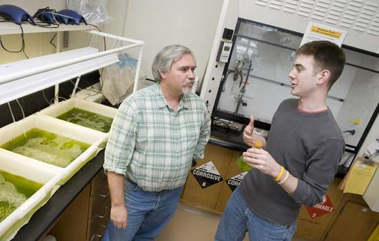 Les algues peuvent être facilement cultivées en laboratoire. © A. Sue Weisler, RIT