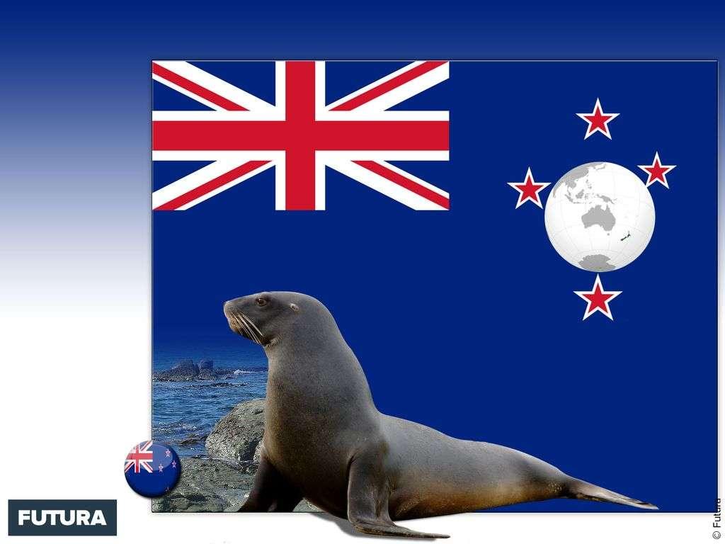 Drapeau : Nouvelle-Zélande