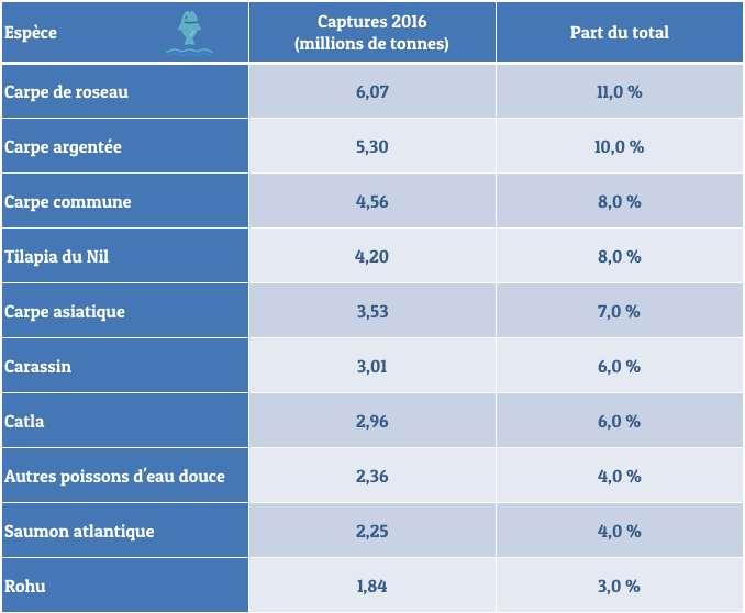La carpe domine largement le classement des espèces les plus prisées dans l'aquaculture. © C.D, Futura, d'après FAO.